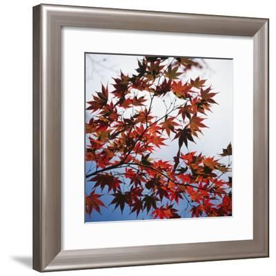 Colorful leaves-Micha Pawlitzki-Framed Photographic Print