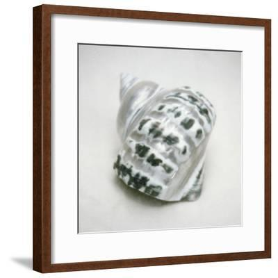 Pearlized Green Turban Shell-John Kuss-Framed Photographic Print