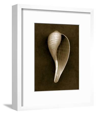 Graceful Fig Shell 2-John Kuss-Framed Photographic Print