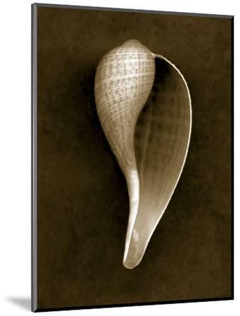 Graceful Fig Shell 2-John Kuss-Mounted Photographic Print