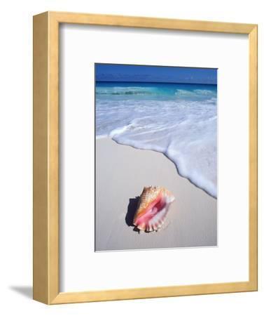 Mexico, Yucatan Peninsula, Carribean Beach at Cancun, Conch Shell on Sand-Chris Cheadle-Framed Photographic Print