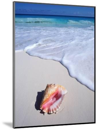 Mexico, Yucatan Peninsula, Carribean Beach at Cancun, Conch Shell on Sand-Chris Cheadle-Mounted Photographic Print
