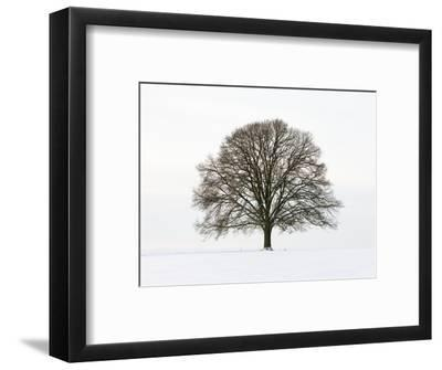 Old oak tree on a field in snow-Frank Lukasseck-Framed Photographic Print