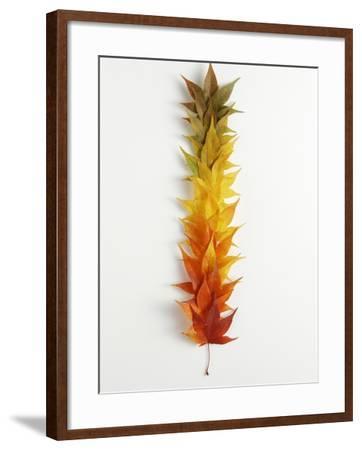 Autumn Foliage--Framed Photographic Print
