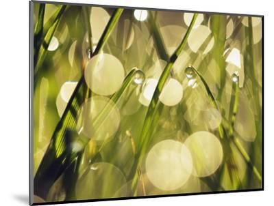 Leaves of grass with dew drops-Frank Krahmer-Mounted Photographic Print