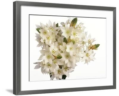 Bouquet of white flowers--Framed Photographic Print