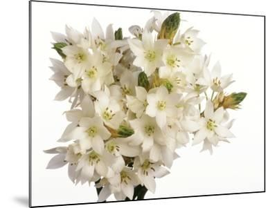 Bouquet of white flowers--Mounted Photographic Print