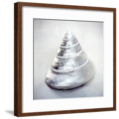 Pearl Trochus Shell-John Kuss-Framed Photographic Print