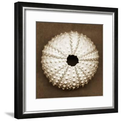 Pink Sea Urchin-John Kuss-Framed Photographic Print