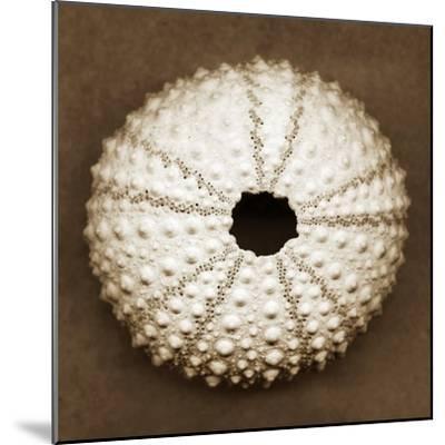 Pink Sea Urchin-John Kuss-Mounted Photographic Print