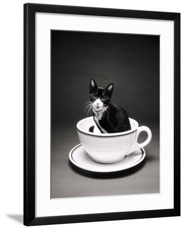 Kitten in a Teacup-Robert Essel-Framed Photographic Print
