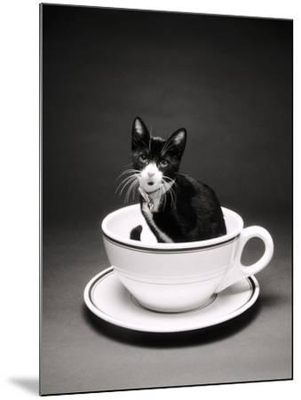 Kitten in a Teacup-Robert Essel-Mounted Photographic Print