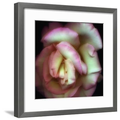 Love is a Rose-Nathan Griffith-Framed Photographic Print