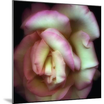 Love is a Rose-Nathan Griffith-Mounted Photographic Print