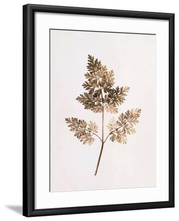 Fronds of Leaves-William Henry Fox Talbot-Framed Photographic Print