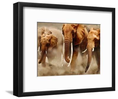 African Elephants-Martin Harvey-Framed Photographic Print