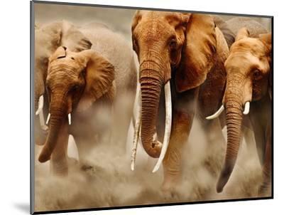 African Elephants-Martin Harvey-Mounted Photographic Print