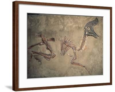 Cretaceous Lambeosaurus Dinosaur Fossil-Kevin Schafer-Framed Photographic Print