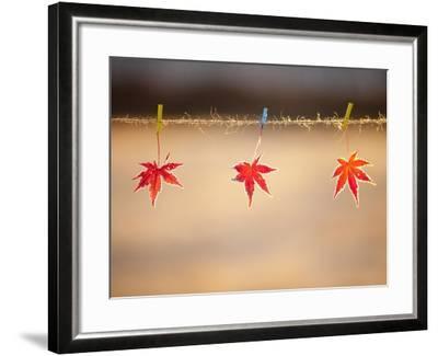 Fallen leaves hanging the rope-JongBeom Kim-Framed Photographic Print