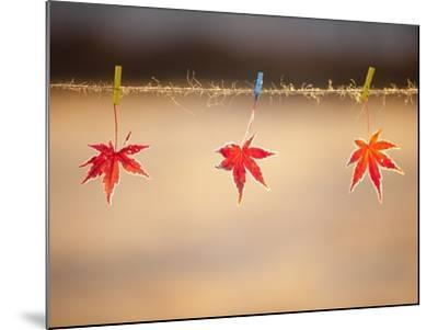 Fallen leaves hanging the rope-JongBeom Kim-Mounted Photographic Print
