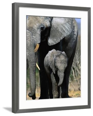 Elephant Mother and Calf-Theo Allofs-Framed Photographic Print