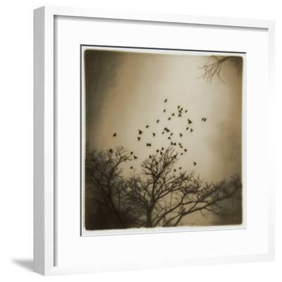 Birds and Trees, Discovery Park-Kevin Cruff-Framed Photographic Print
