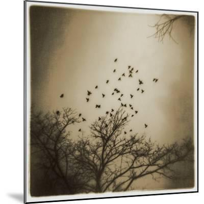 Birds and Trees, Discovery Park-Kevin Cruff-Mounted Photographic Print