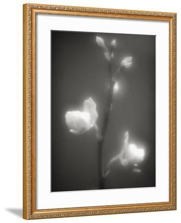 Buds and Flowers-Henry Horenstein-Framed Photographic Print