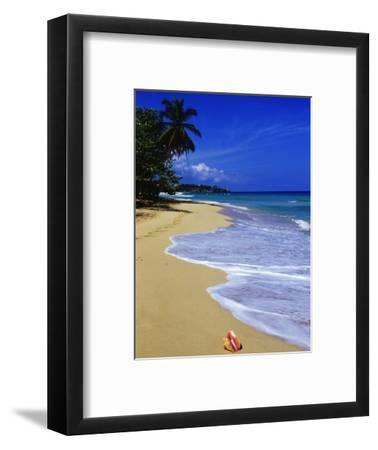 Conch Shell on Playa Grande Beach-Danny Lehman-Framed Photographic Print