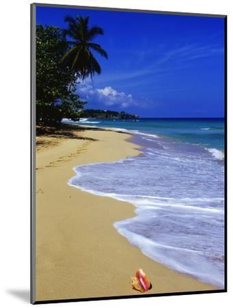 Conch Shell on Playa Grande Beach-Danny Lehman-Mounted Photographic Print