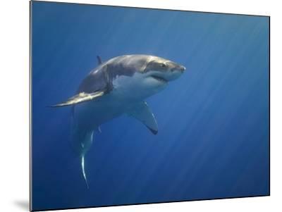Shark in Open Water-Tim Davis-Mounted Photographic Print