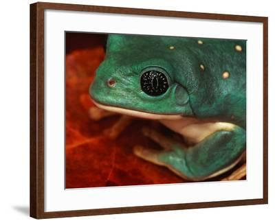 Tree Frog--Framed Photographic Print