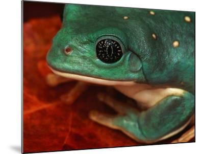 Tree Frog--Mounted Photographic Print