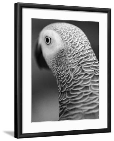 Back of Parrot's Head-Henry Horenstein-Framed Photographic Print