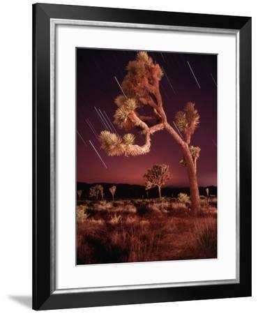 Meteor Trails and Joshua Trees-Richard Cummins-Framed Photographic Print