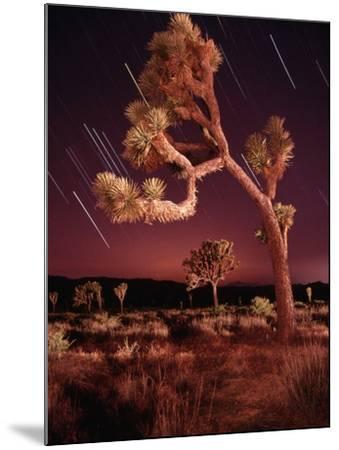 Meteor Trails and Joshua Trees-Richard Cummins-Mounted Photographic Print