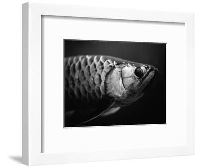 Fish-Henry Horenstein-Framed Photographic Print
