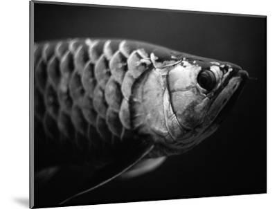 Fish-Henry Horenstein-Mounted Photographic Print