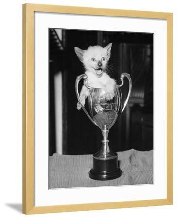 Siamese Kitten in a Trophy Cup--Framed Photographic Print