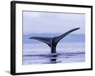 Tail Fin of Humpback Whale Sounding in Frederick Sound-Paul Souders-Framed Photographic Print
