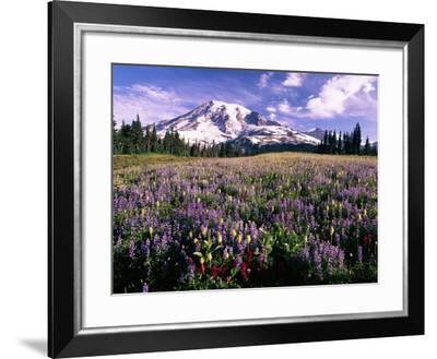 Wildflowers in Mt. Rainier National Park-Stuart Westmorland-Framed Photographic Print