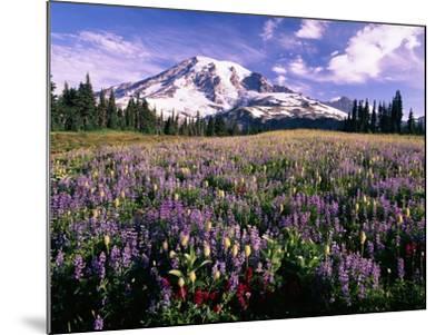 Wildflowers in Mt. Rainier National Park-Stuart Westmorland-Mounted Photographic Print