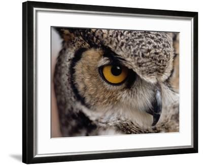 Eye of a Great Horned Owl-W^ Perry Conway-Framed Photographic Print