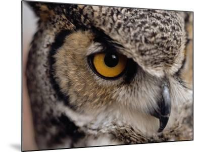 Eye of a Great Horned Owl-W^ Perry Conway-Mounted Photographic Print