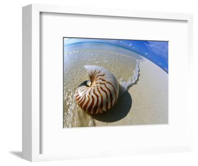 Seashell Resting on Shore-Leslie Richard Jacobs-Framed Photographic Print