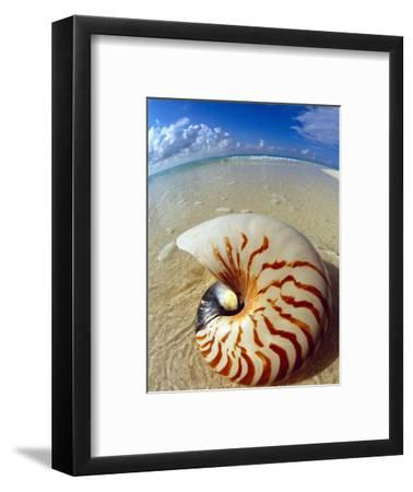 Seashell Sitting in Shallow Water-Leslie Richard Jacobs-Framed Photographic Print