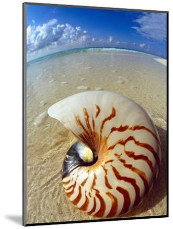 Seashell Sitting in Shallow Water-Leslie Richard Jacobs-Mounted Photographic Print