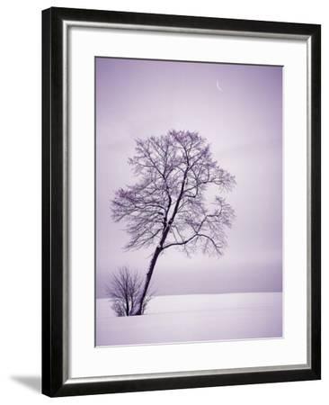 Lone Tree in Snow-Jim Zuckerman-Framed Photographic Print