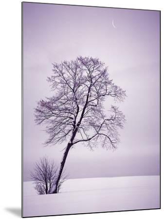 Lone Tree in Snow-Jim Zuckerman-Mounted Photographic Print