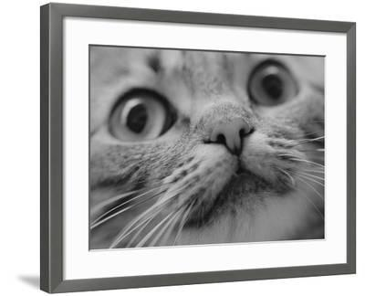 Close Up of Cat's Face-Henry Horenstein-Framed Photographic Print
